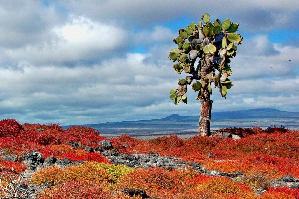 Самые экзотические страны мира: Гренада, Венесуэла, Эквадор, Бразилия, Оман
