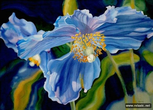 Художник Марни Уорд: радость от каждого цветка