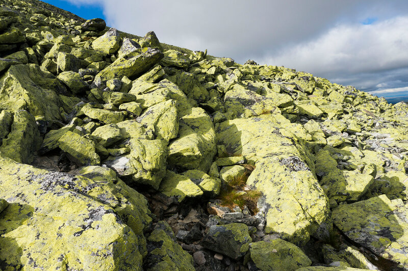 желтый лишайник (map lichen) на камнях на горе Муэн (Muen)