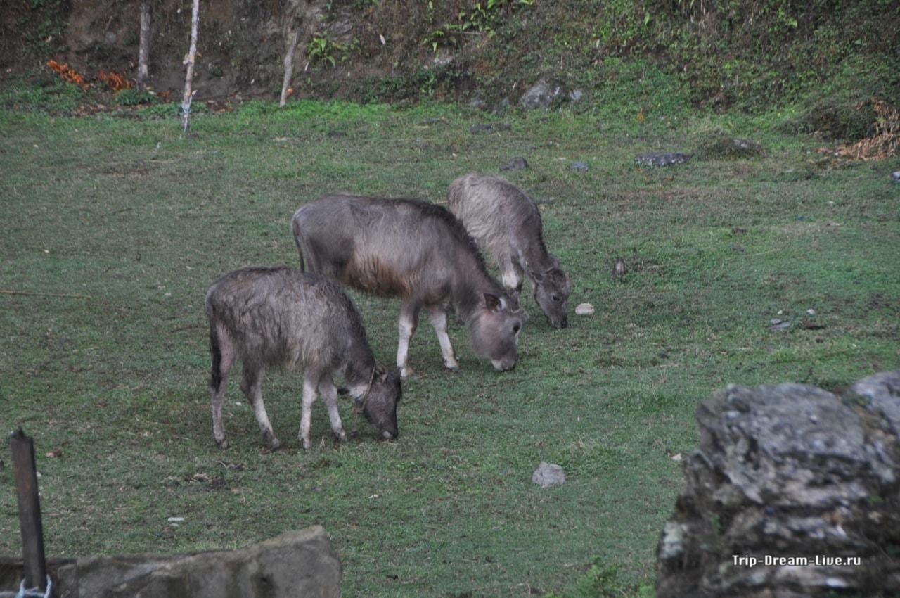 Представители местной фауны не обращают на дождь никакого внимания
