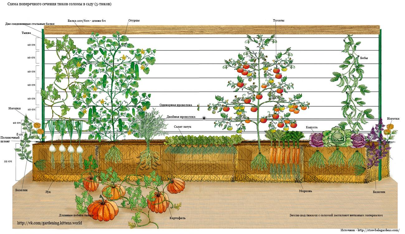 Схема посадки цветов в контейнер