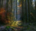 Сказочный лес....