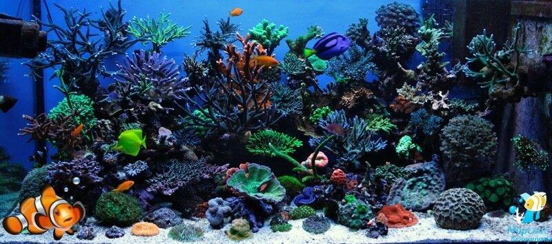 Домашние питомцы: аквариумные рыбки. Советы начинающим рыболюбителям