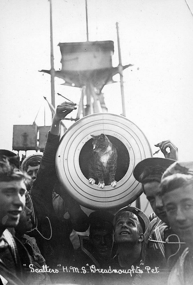 Ship's Cat on HMS Dreadnought.
