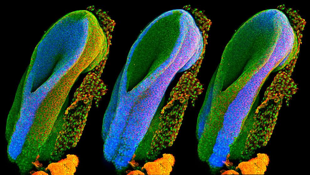 3. Модель синтетического канала ДНК. Каждая клетка окружена мембраной, которая служит защитой с