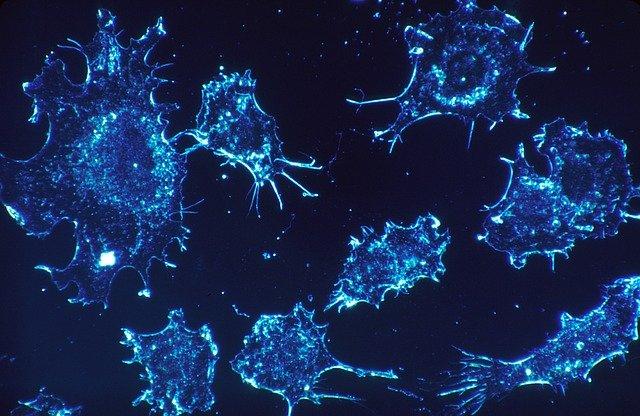 Американские ученые посоветовали способ продления жизни