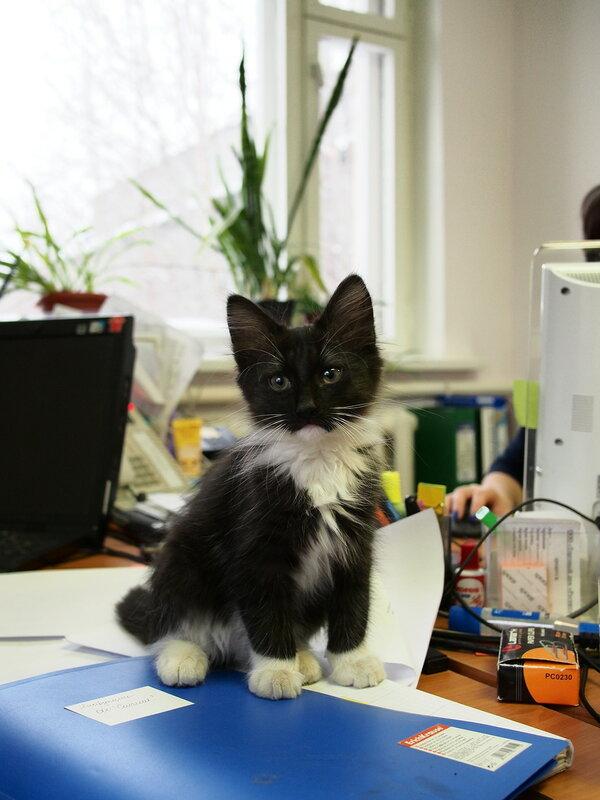 Кот в офисе