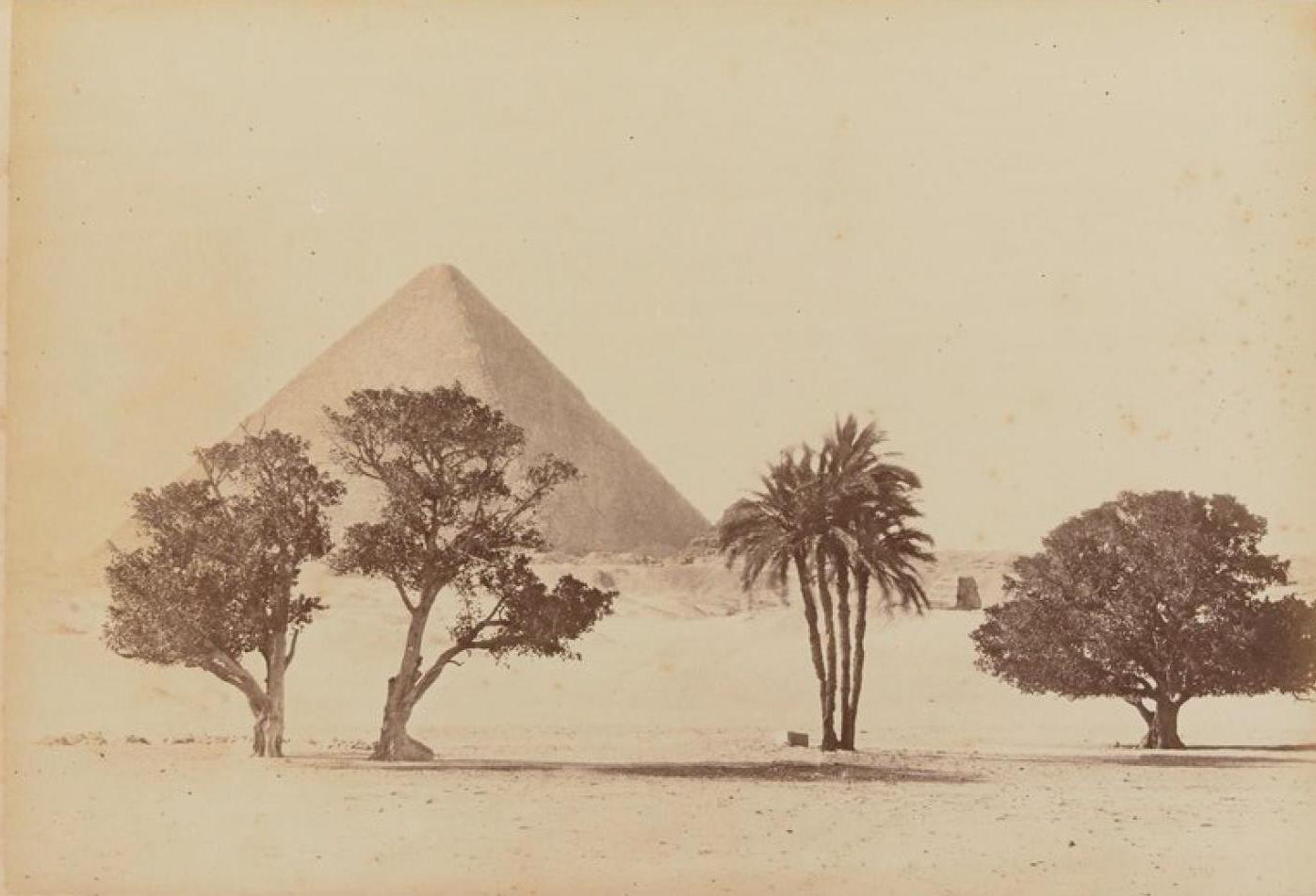 Сикаморы и пирамида Хеопса