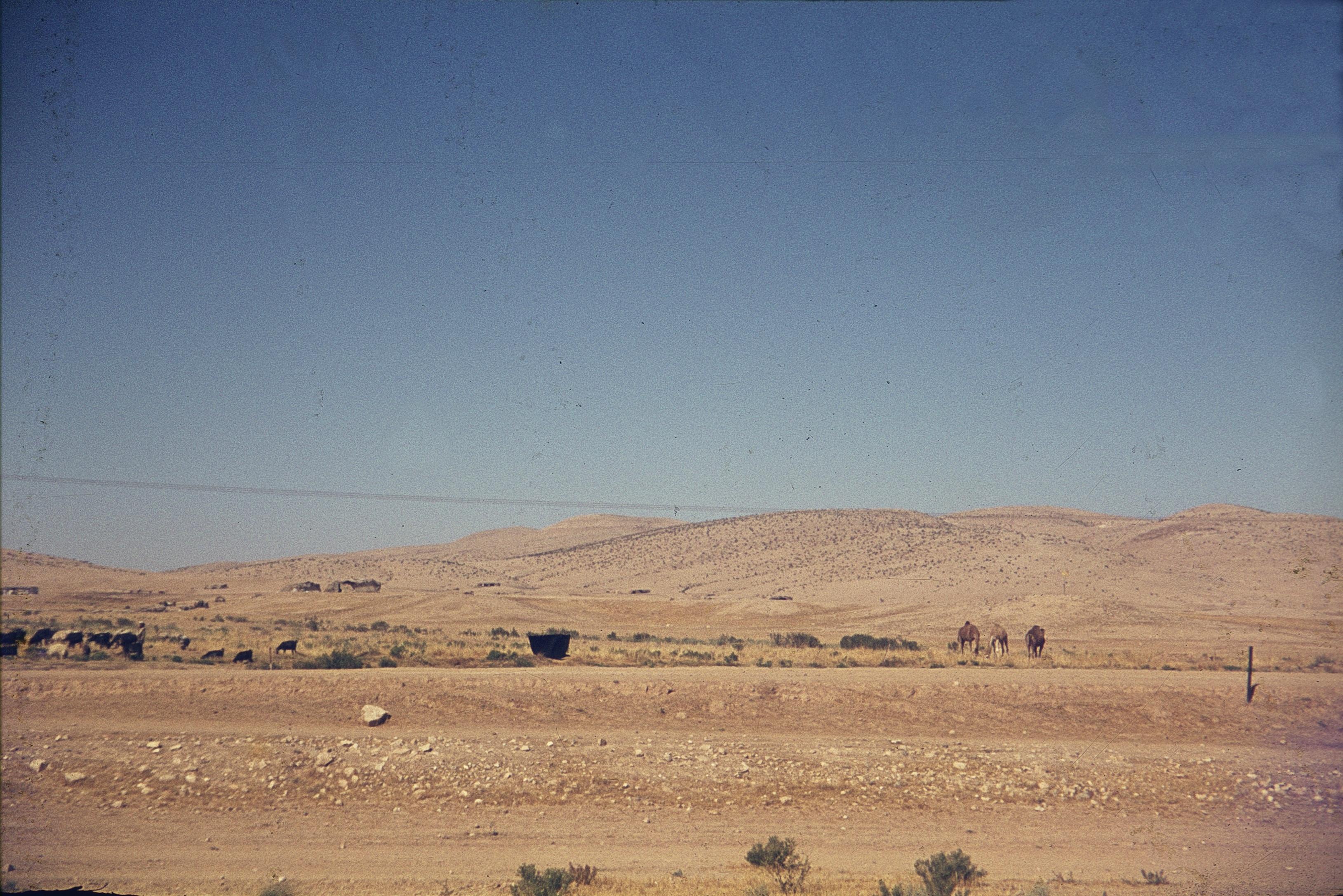 Негев. Бедуины