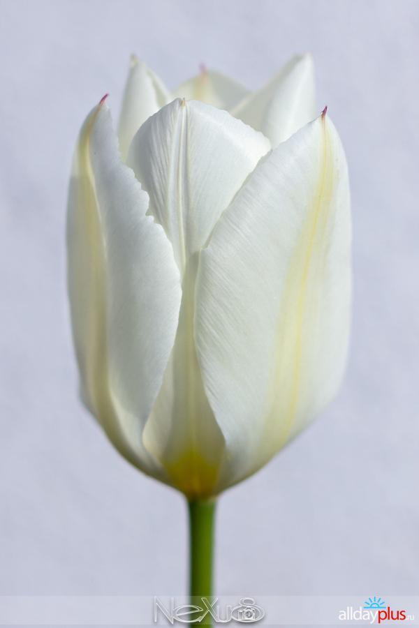 Я люблю все цветы, выпуск 215a84.