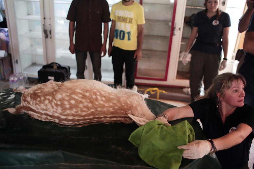 10. Здесь был и эму. Это вторая по величине птица после страуса. (Фото Khalil Hamra):