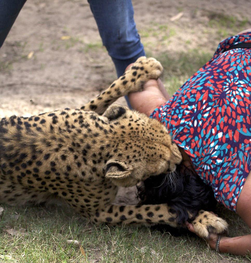 19. Одна из самых известных фотографий нападения животного на человека. Город Гаосюн на юго-зап