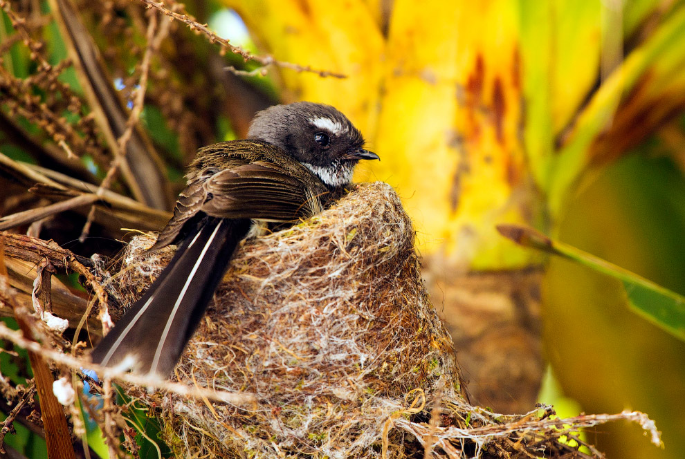 13. Новая Зеландия — одна из самых поздно заселённых территорий. Различные виды анализов позвол