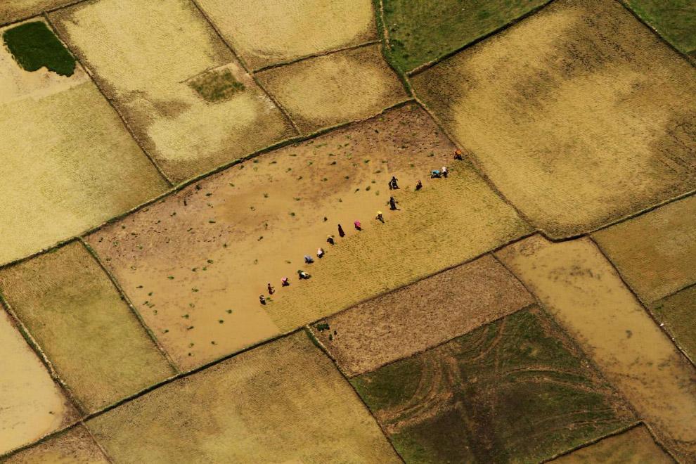 3. Сборка урожая спаржи в Германии, 1 мая, 2013. (Фото MICHAELA REHLE):