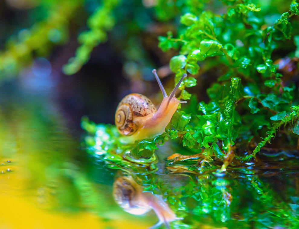 9. Первично улитки обитали в море, однако многие из них перешли к жизни в пресной воде и на суш