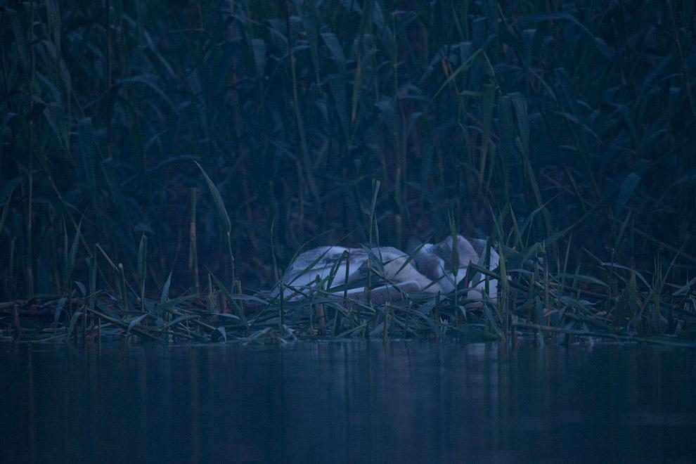 15. А ночью, в 24 часов, они тихо тихо приплыли ко мне, лежащему в маленькой лодочке, и стали с