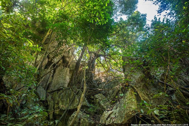 2. В Цинги обитает огромное количество диких животных, растений, многие из которых находятся под угр