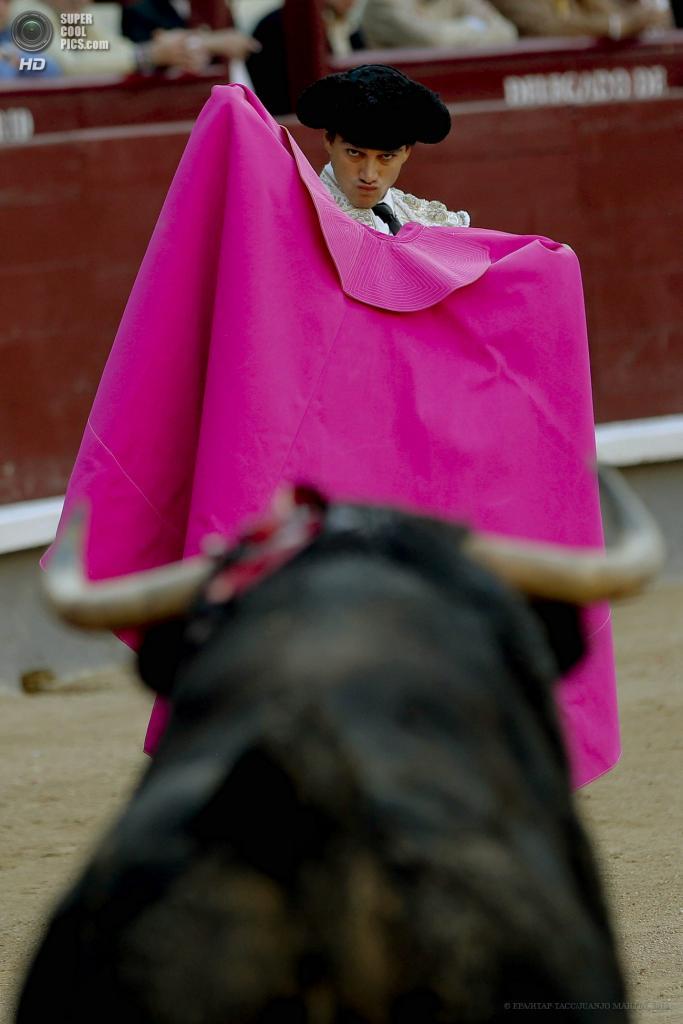 Фестиваль корриды ко Дню Святого Исидора Мадридского (8 фото)