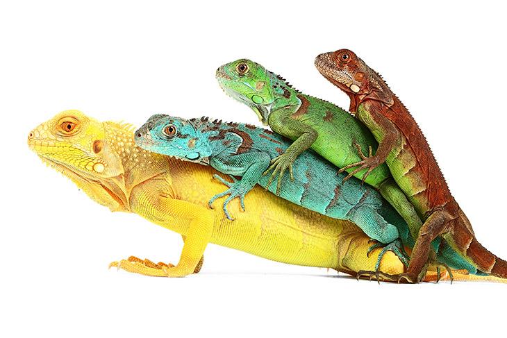 Рептилии: жизнь на белом (18 фото)