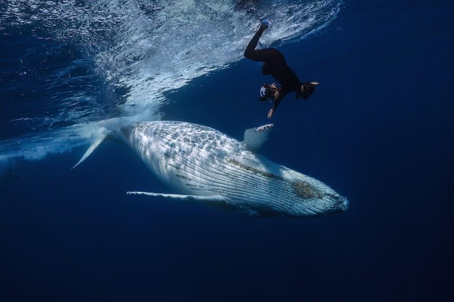 15. Фотограф уверяет, что эти огромные и одновременно с этим деликатные создания заслуживают бережно