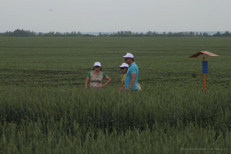 День поля в Петровском районе, 17 июня 2016 года