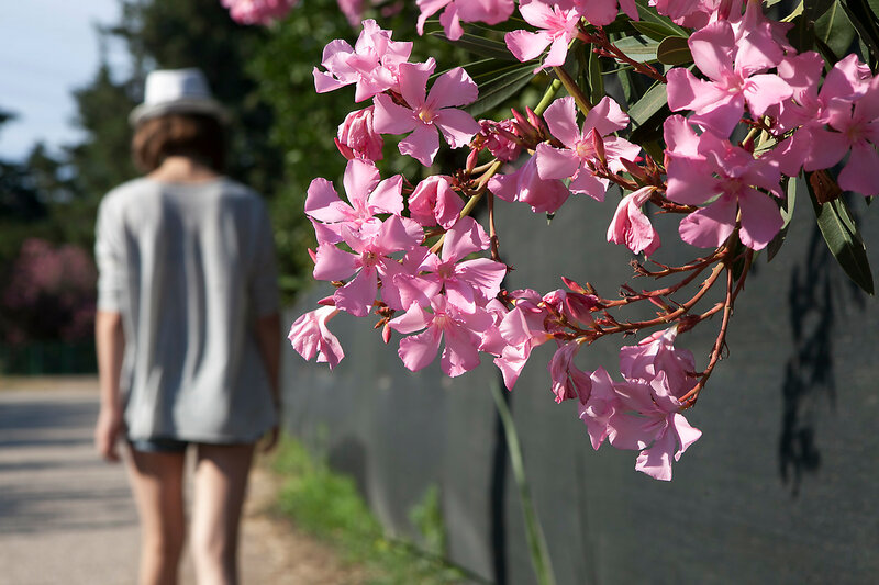 Pink oleander in the foreground and Romantic and nostalgic silhouette of a girl