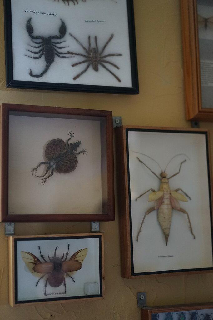 Выставки бабочек и насекомых. Сафари-парк, Геленджик