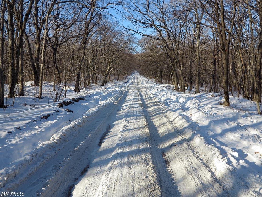 Дорога по острову Русский