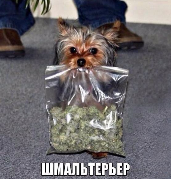 Фотоприкол про собаку и шмаль