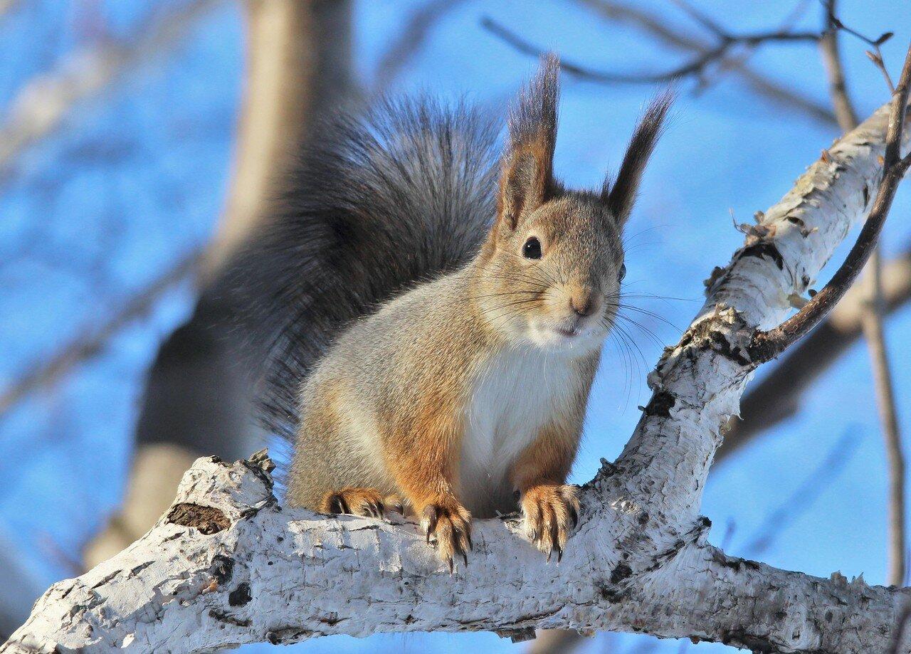 - Где мои орехи?