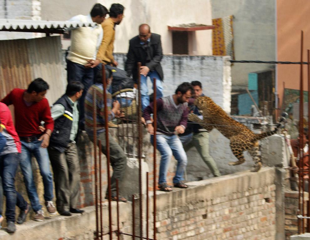 10. Ежегодный турнир по поло среди слонов, Шри-Ланка, февраль 2007. 4-тонный спортсмен напал на микр