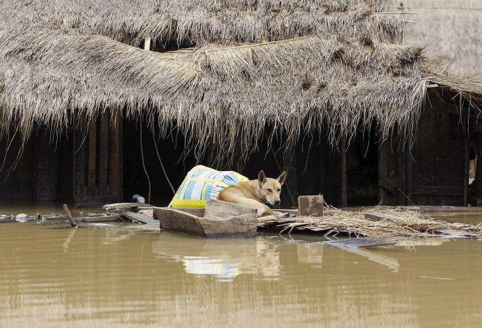 8. Еще несколько колоритных местных пейзажей. (Фото Soe Zeya Tun   Reuters):