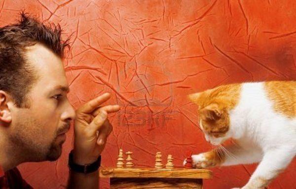 Ученые из Университета Миннесоты обнаружили, что наличие кошки в доме может быть полезно для ваш
