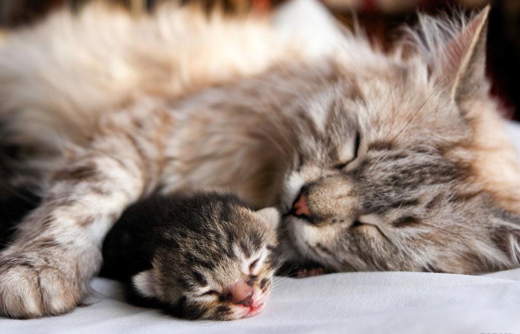 7. Мама вашей кошки с вами не знакома.