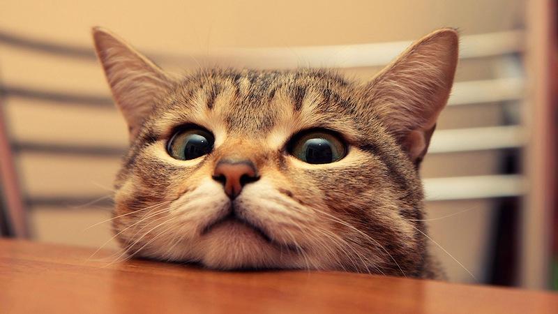 12. Кошка не хнычет, что у нее кончились целые колготки.