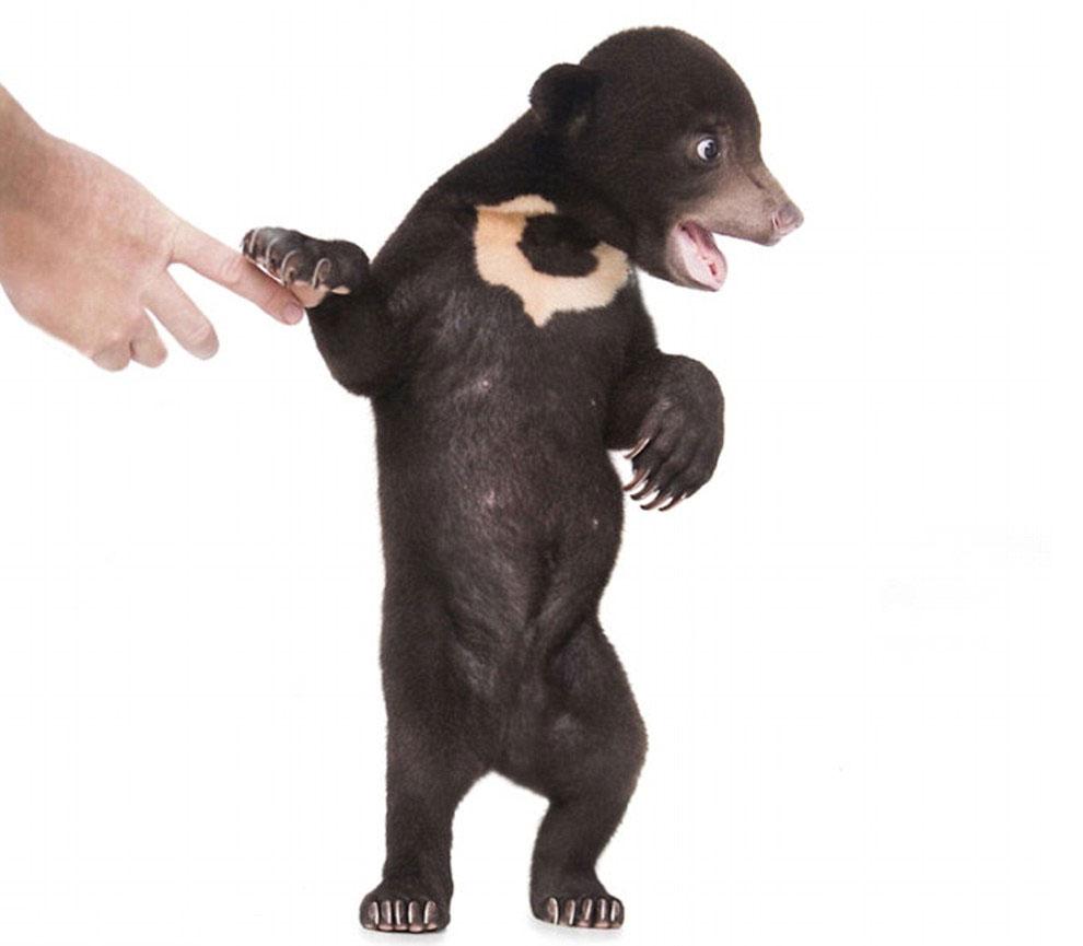 Первая фотосессия самого милого медвежонка в мире (8 фото)