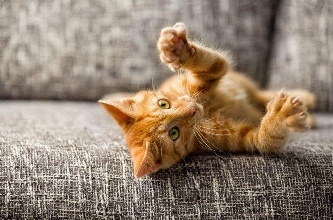 6. У тебя появится прекрасный друг. Совсем недавно ученые (не британские) выяснили, что наличие кота