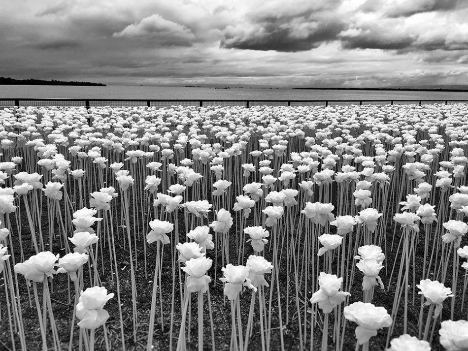Поощрительная премия в категории «Пейзажи». (Фото Scott Woodward):