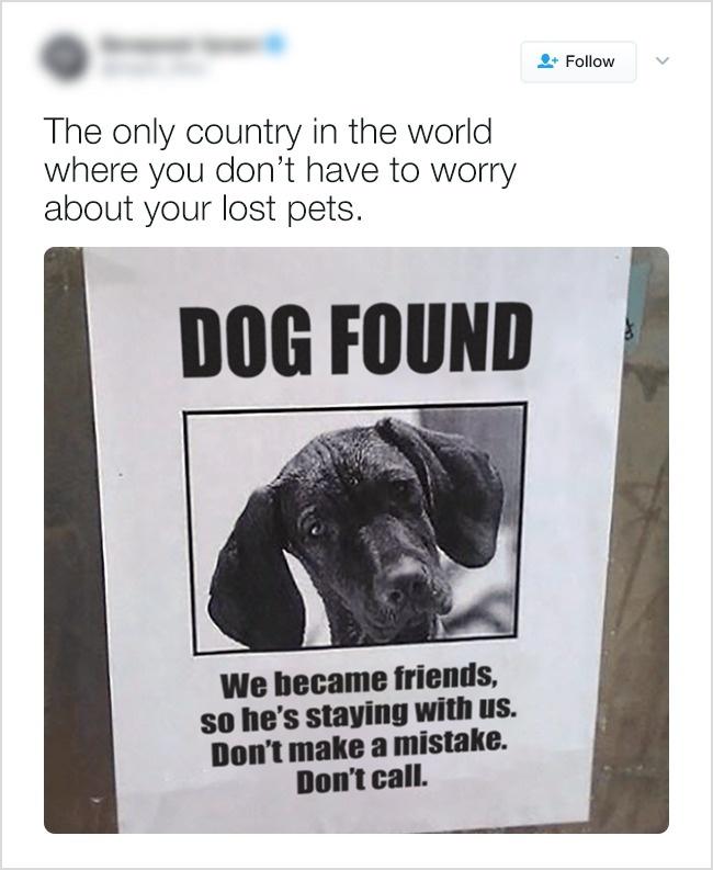 Это единственная страна в мире, где можно не волноваться о потерявшихся любимцах. В объявлении напис