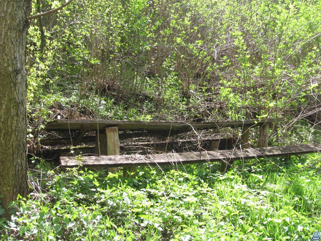 Стол с лавками в лесу