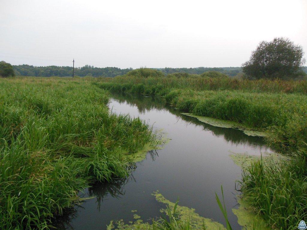 Река Боромля в конце июля