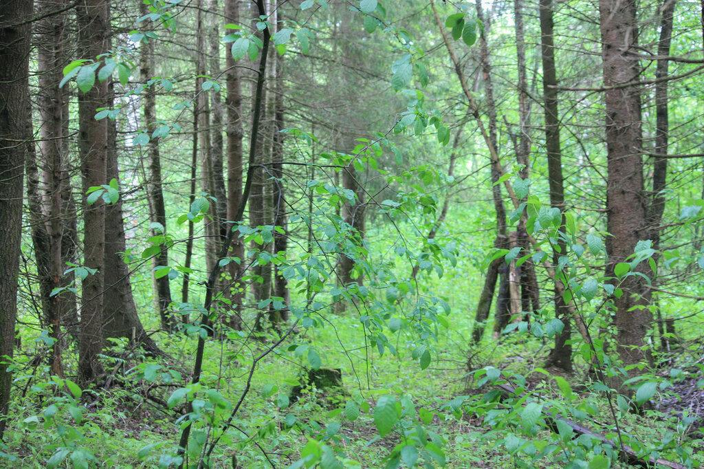Дмитров лес.jpg