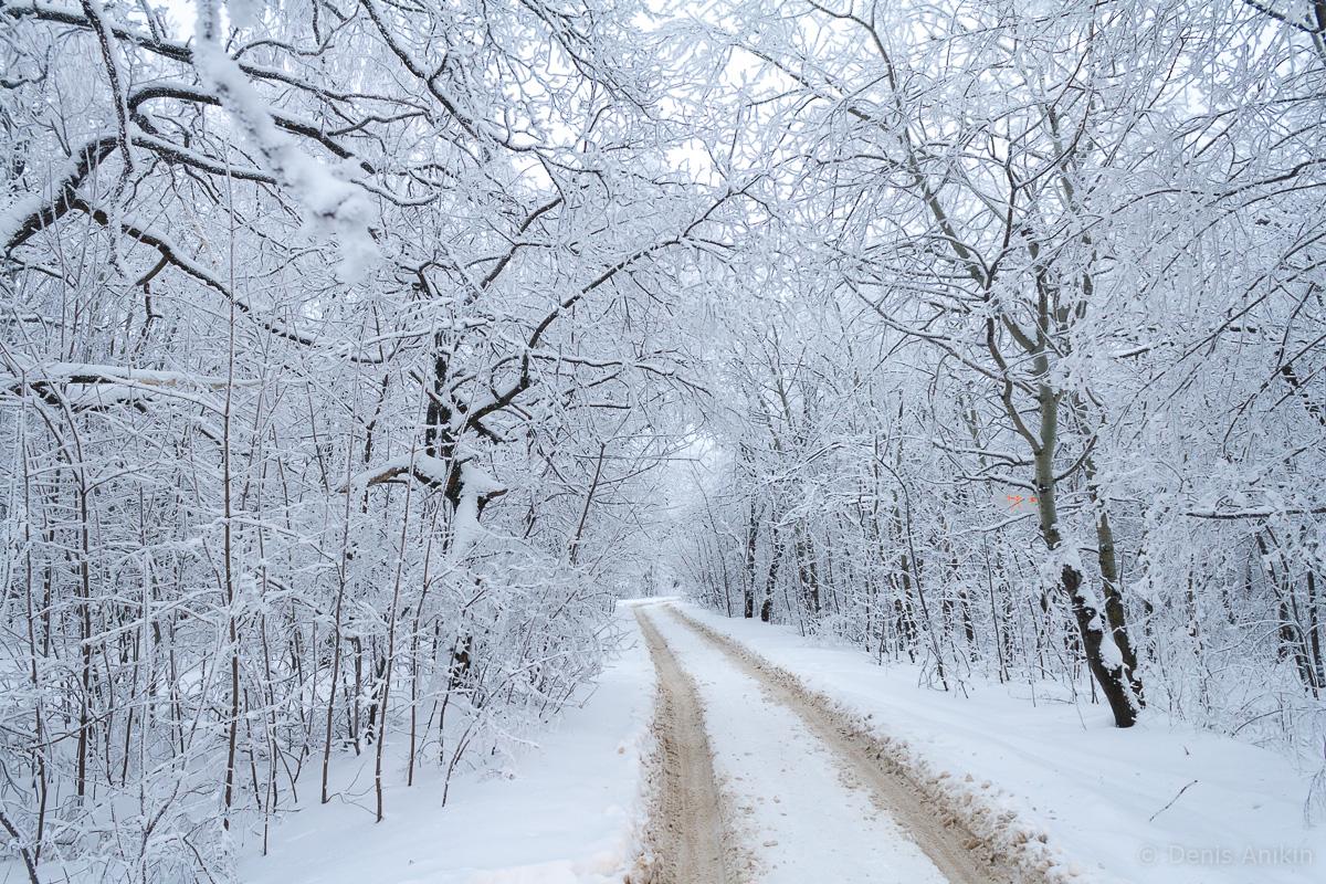 зима иней кумысная поляна саратов фото 1