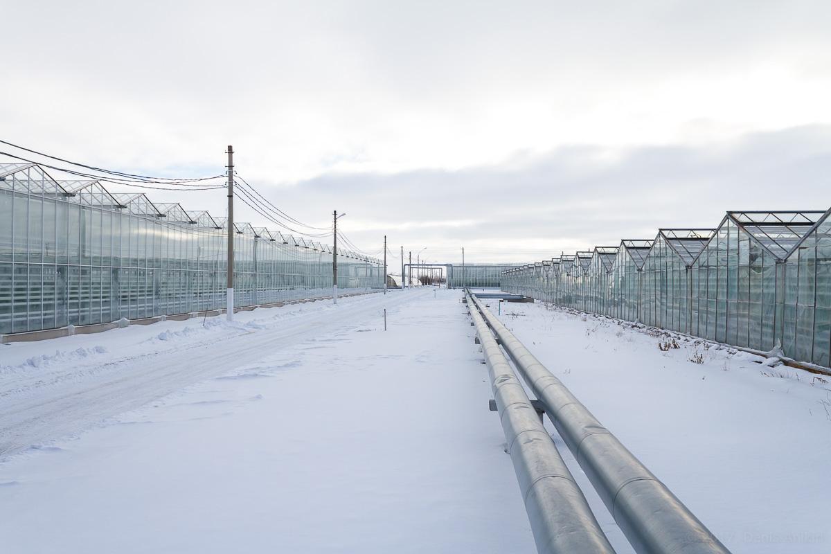 Агрокомплекс Волга выращивание огурцов фото 2