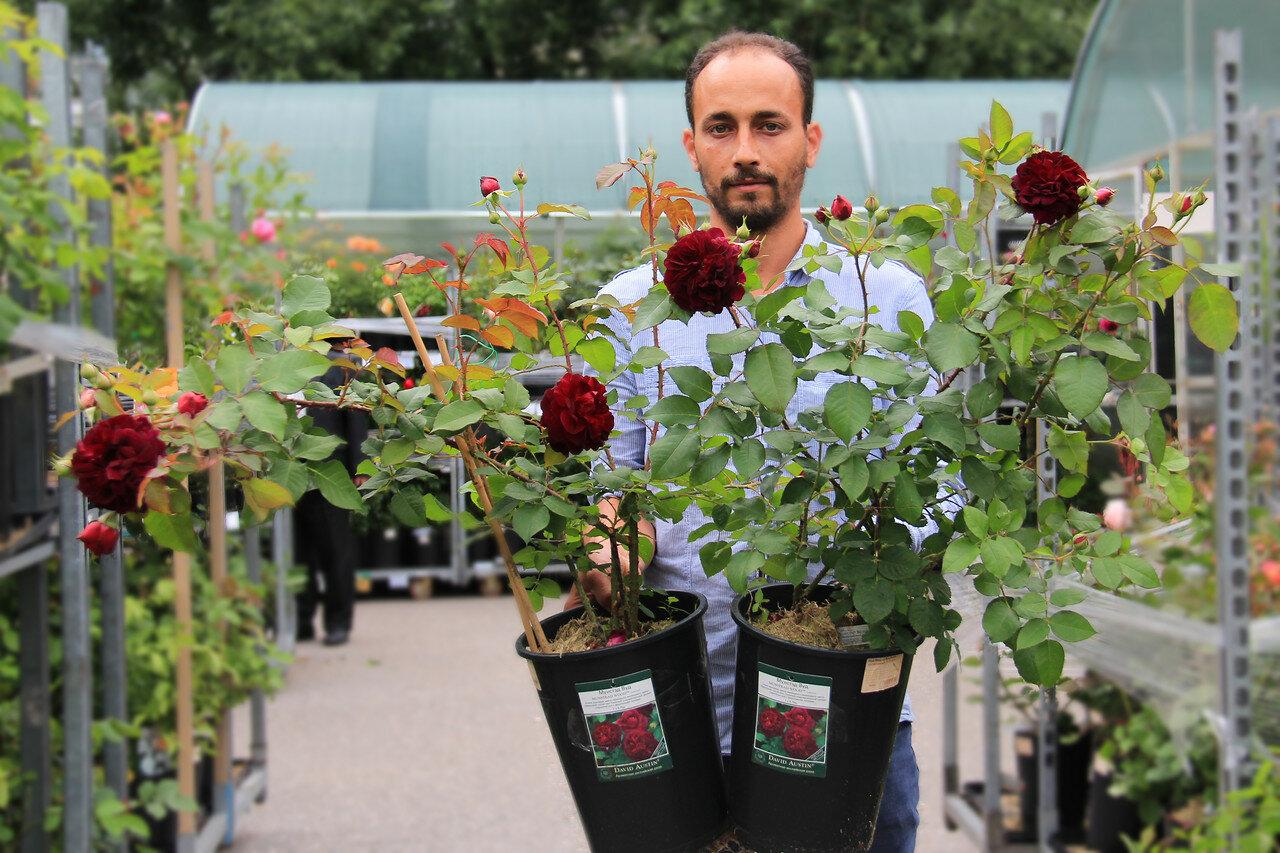 Сегодня в продаже! Роскошные Розы ЗКС от мировых лидеров!