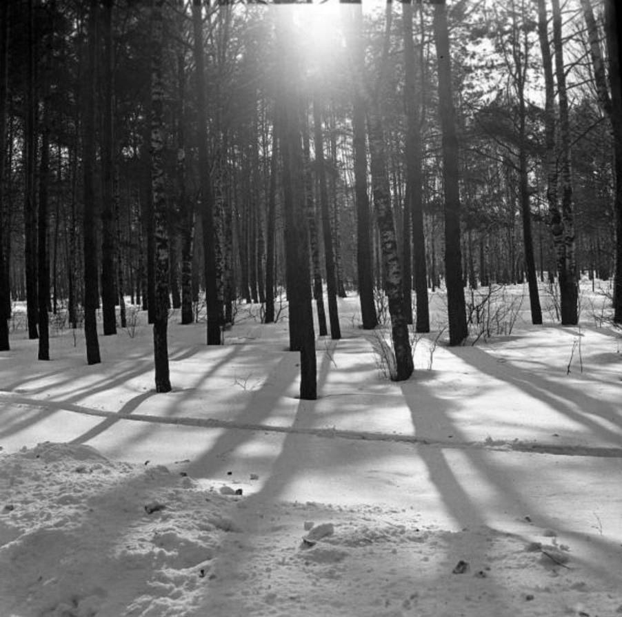 Прогулка в Петровско-Разумовское. «Лес против солнца»