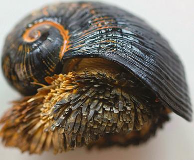 Бронированная улитка улитки, сульфиды, улитка, железа, железо, может, животное, животных, состоит, пирита, минералов, содержащих, современных, Чешуя, грейгита, условиях, нестабильны, практически, достаточно, группам