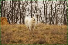 http://img-fotki.yandex.ru/get/109793/15842935.472/0_f5b4a_50e40444_orig.jpg