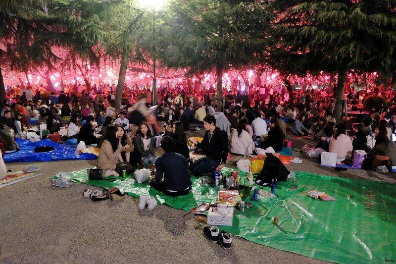 Пикники во время цветения сакуры Нагоя Tsuruma Park
