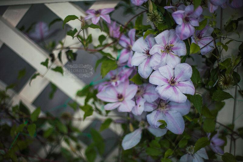 Садовые цветы для вдохновения.